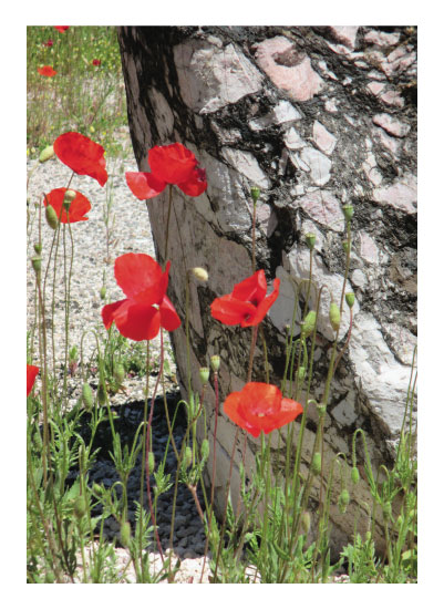 art prints - Poppyrock by Leah Mowry