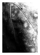 Broken Heart by Julie Thompson