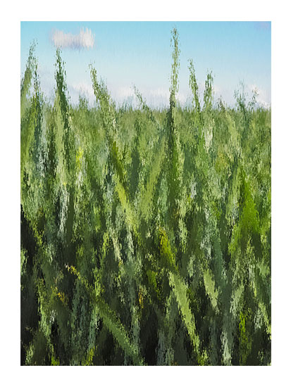 art prints - Through the field by Viara Trendafilova