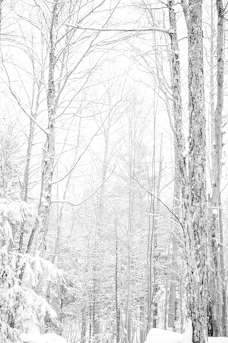 art prints - Vermont Woods by Kerrie Wilson