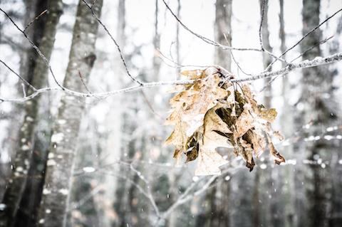 art prints - Winter Beauty by Kerrie Wilson