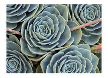 Botanic Hues by the duarte creative