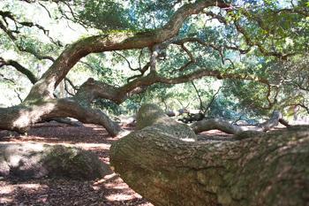 Infinite Branches