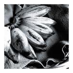 Tally Me Banana by Christine Simons
