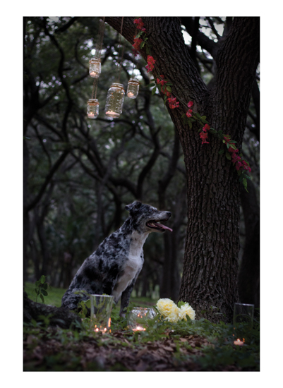 art prints - Beneath Oak Tree Branches Battling For Sun & Stars by Denise Mueller