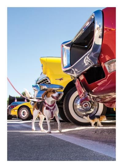 art prints - Kitschy Beagle Marks the Spot by Denise Mueller
