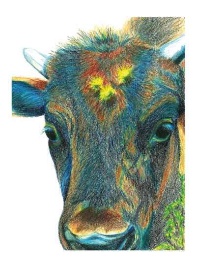 art prints - Baby Bison by Kimberly Hubbard