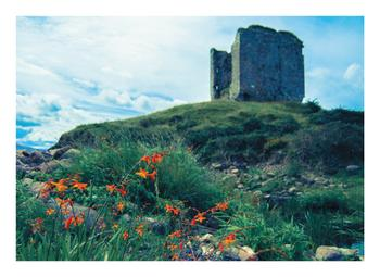 Minard Castle and Wildflowers