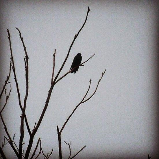 art prints - Lone Bird by Julie T