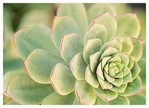 Succulent by Katina Matheson