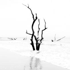 Boneyard Beach I