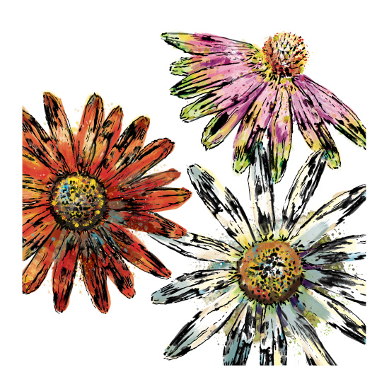 art prints - Painted Echinacea 3 Series of 3 by CaroleeXpressions