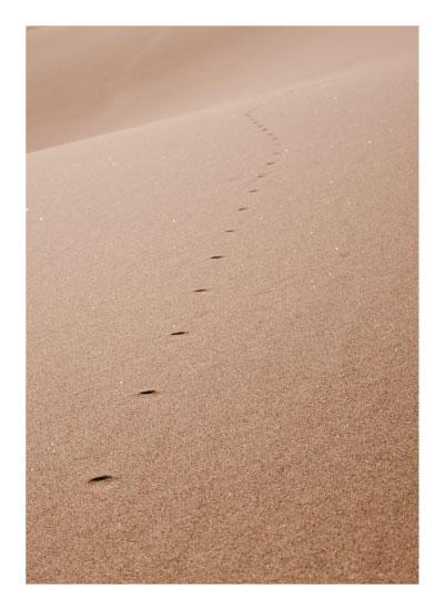 art prints - Prints in Sand Dunes by Jenny Folman