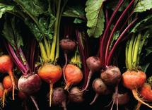 Eat Your Beets by Amy Roth