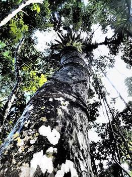 Tree in Distress