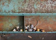 Acorns in Toolbox by Shaun B