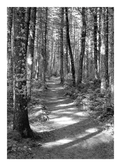art prints - Adirondack Sunshine and Shadow by Anne Peck
