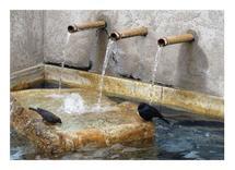Taking a Bath by Anne Peck