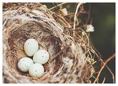 art prints - Nest by Katina Matheson