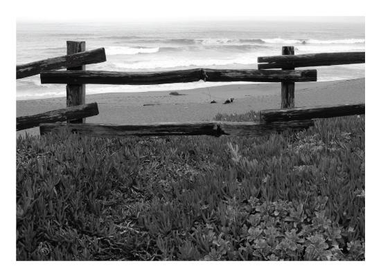 art prints - Point Reyes by Anne Peck