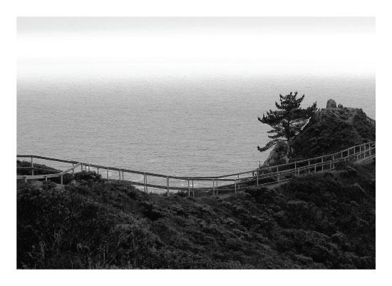 art prints - Coastal Pine by Anne Peck