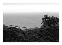 Coastal Pine by Anne Peck