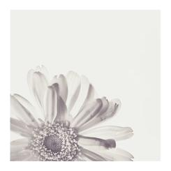 Monochromatic Daisy