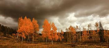 Aspen Flames