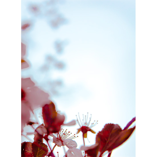 art prints - Blossom Air by Kevin Barrack