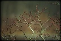 Sprigs of Life by Jeremy David Arnold