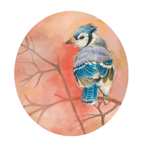 art prints - Blue  Jay by Kristen Panlilio