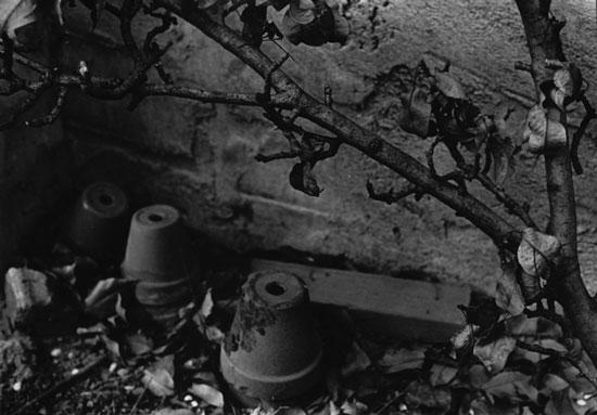 art prints - Garden Pots 2 by Judith Moderacki