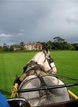 Irish cart horse by Richard Coble