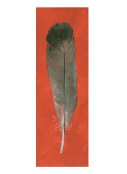 Grey Duck Feather