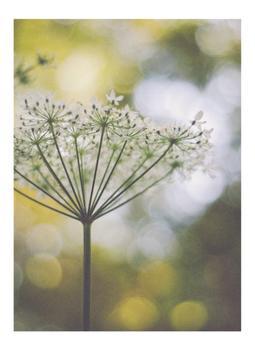 wildflowerII
