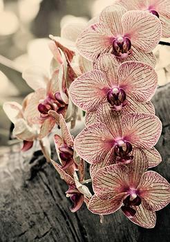Cascade of Orchids