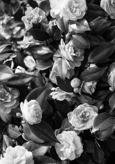 art prints - Vancouver Floral by Celine Jackson