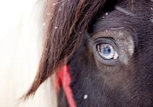 Kind Eyes by Alisha Zavadil