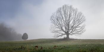 Trees 4