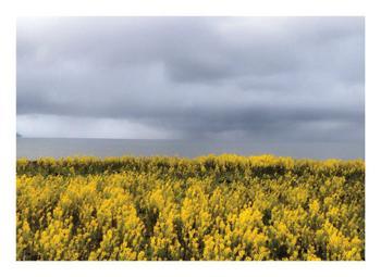 Yellow Lake Flowers
