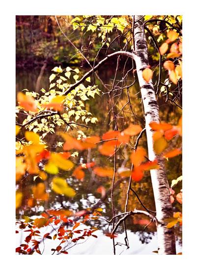 art prints - Fall Branch by Barbara Bowen