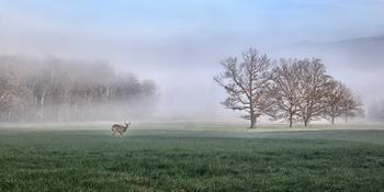 Deerscape