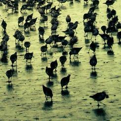 Busy Birds (Lime)