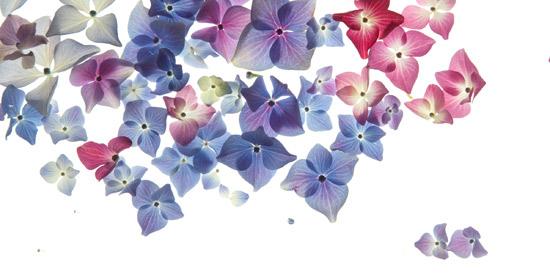 art prints - Color Spots by Susan Fan-Brown
