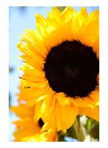 Sun gold by LeeAnne Mallonee