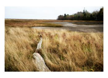 Salt marsh and driftwood