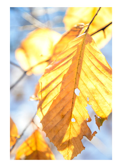 art prints - Late leaf by LeeAnne Mallonee