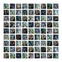 Reverie of Trees Grid