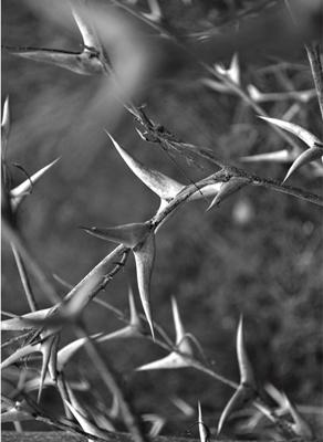 art prints - Wildlife 1 by Ele Papers