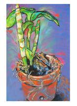 Beauty in a Pot by Kristen Panlilio